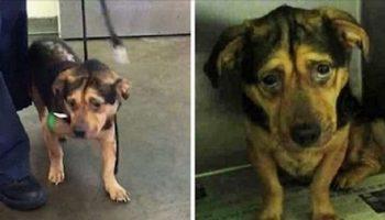 Эту пару отговаривали брать из приюта самого грустного пса. Вот как выглядит собака сейчас