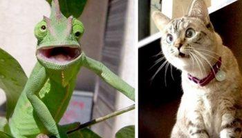 Смешные зверушки, которые не могут скрыть своего искреннего изумления