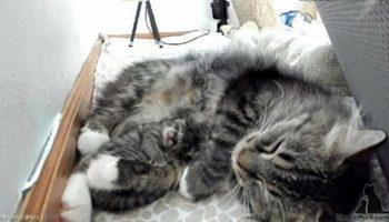 Рожденье кошачьего чуда: котёнок родился на 4 дня позже всех остальных котят и тем самым спас свою маму