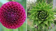 20 фотографий, доказывающих, что природа — это главный перфекционист!