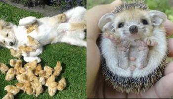 12 фотографий детенышей животных, на которых можно смотреть вечно!