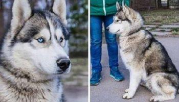 Потрясающе красивая собака сама пришла проситься в приют