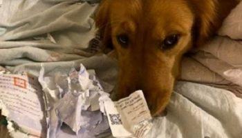 Как собака неожиданно спасла хозяйку от заражения коронавирусом