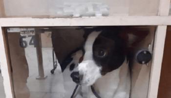 В запорожском супермаркете сдали в камеру хранения собаку