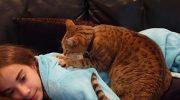 Объяснения ученых, почему кошка топчет нас лапками и что она хочет этим сказать