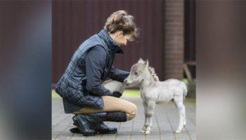 Под Питером родился самый маленький конь в мире!