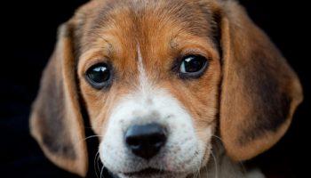 Георгий АСИН: Все собаки достойны того, чтобы к ним отнеслись с великим уважением