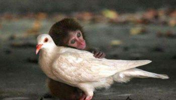 35 фото необычной дружбы среди животных