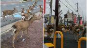 Пока люди сидят на карантине, животные хозяйничают в городе