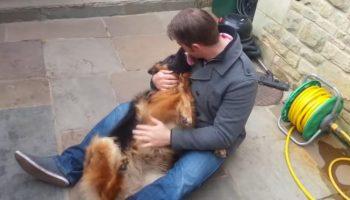Эта собака рыдала от счастья, когда встретилась со своим лучшим другом!