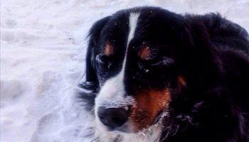 Пес, по имени Ватсон, спас заживо похороненных котят