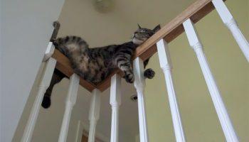17 сладк спящих котиков. Им можно позавидовать!