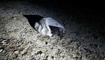 В Индиане спасли и выходили маленького котенка, которого выбросили в мусорном мешке на верную смерть