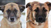 Двух неразлучных собак выбросили на улицу, потому что стали не нужны хозяевам
