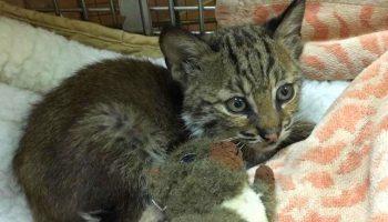 Мужчина подобрал брошенного маленького котенка на дороге