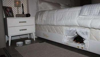 Новая мода для домашних любимцев: ниша в хозяйской кровати