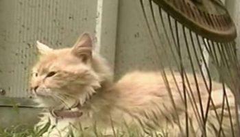 Кошка, которая недавно потеряла котят, украла у собаки новорожденных щенков.