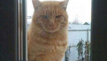 Тощий больной кот, по кличке Пират, постоянно подходил к окну и смотрел, как живут люди.
