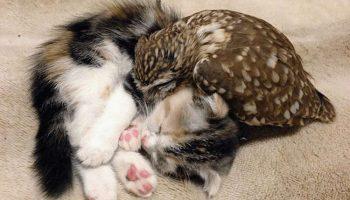 Удивительная дружба котёнка и совёнка