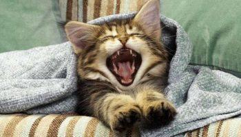 Полезные советы для котиков по уходу за человеком