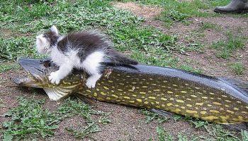 Вот какая получилась рыбалка у кота Васи…