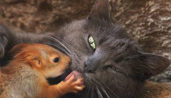 Домашняя кошка стала приемной мамой для маленьких бельчат