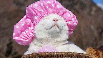О том, каким был самый знаменитый кот Широ, познавший дзен