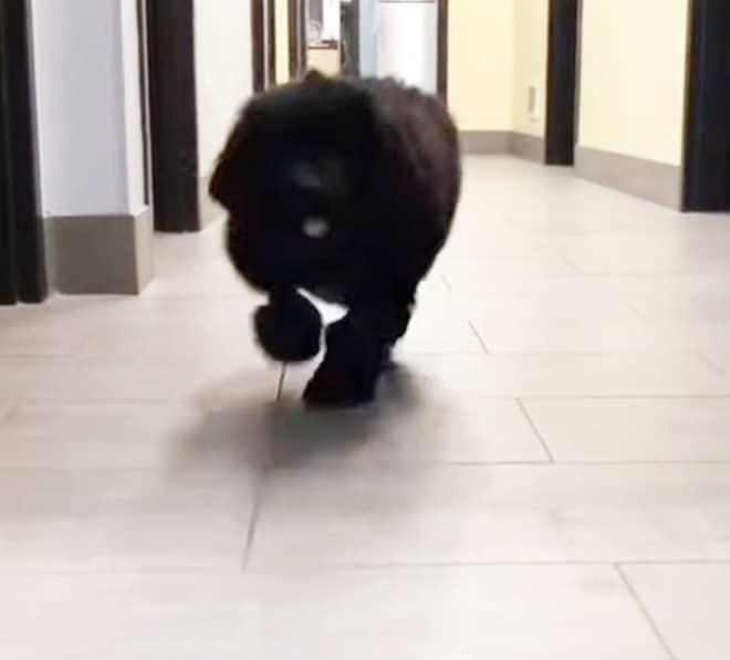 Собака в коридоре