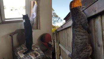 10 фотографий ну очень длинных котиков