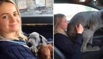 Время летит незаметно: одиннадцать снимков собак и их хозяев до и после.