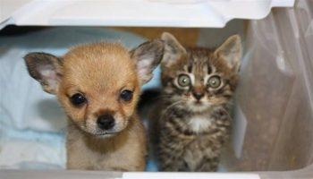 Маленький котенок Чикки спас умирающего щенка