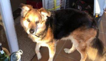 Бездомный пес решил полежать рядом с людьми на лавочке, а в итоге получил новый дом