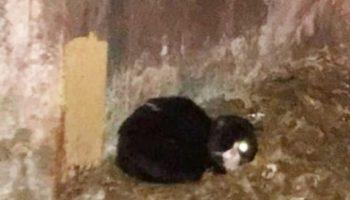 Машинисты подземки не поверили своим глазам: в туннеле сидел полуслепой котик