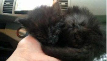 Семейная пара подобрали на обочине еле живого котенка. Через год он вырос и изменил окрас