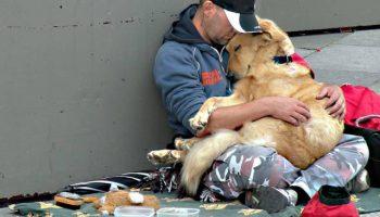 Преданней собаки никого не найти и любят они нас и бедными и богатыми