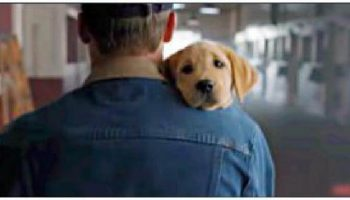 Гиперпозитивное видео для всех любителей домашних животных! Про любовь и настоящую дружбу