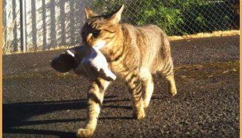 Вот такой хозяйственный кот Серёга!