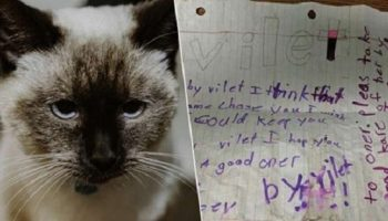 Кошечку нашли с запиской на шее. Никто в приюте не мог сдержать слез, читая записку