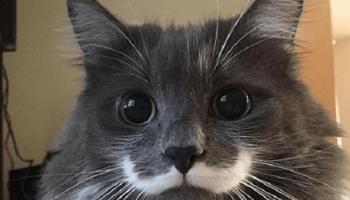 В моде снова роскошные усы! Для начала — у котов!