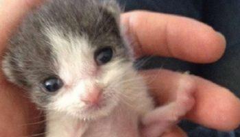 Молодой человек приютил котёнка и за год они стали неразлучными друзьями