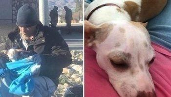 Бродяга спас собачку от верной гибели, а она поменяла его жизнь