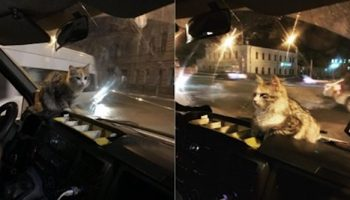 В Астрахани замерзшая кошка кинулась к водителю в маршрутку