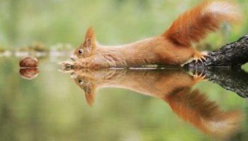 Невероятно милые фото дикой природы от знаменитого австрийского фотографа