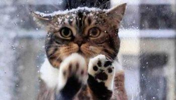 Эта кошка подошла к людям просить помощи у людей, в коробке замерзали ее малыши.