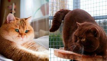 Новая порода котов уже покорила Сеть: это настоящее пушистое чудо!