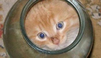 Маленький котенок умудрился залезть в банку, а выбраться не смог. Смотрите что сделала мама кошка