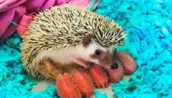 Это 17 чертовски милых новорожденных животных, которых ты, возможно, видишь впервые.