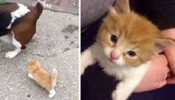 Бездомный котенок пошел за человеком с собакой до самого дома