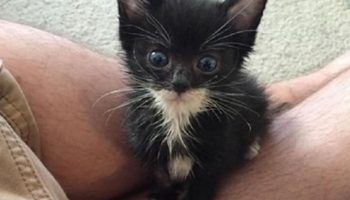 Для спасения этого котенка, парень отдал всю свою зарплату