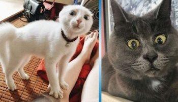 Фото кошачьего удивления, которые изрядно вас повеселят!